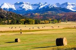 Picture of Hay bails below Rocky Mountains
