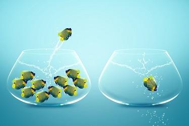 Anglefish jumping to Big bowl