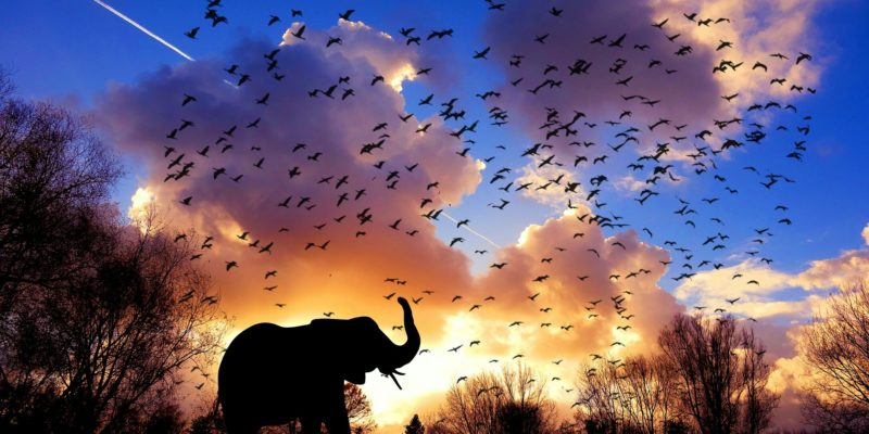 Elephant and birds silhoutted against the morning sunrise sky